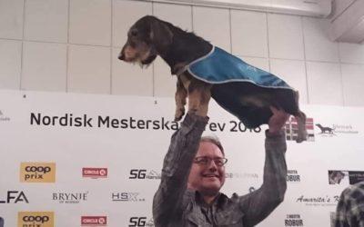 Kritikkskjema fra Nordisk mesterskap i drev 2018