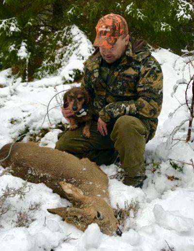Dachshund på jakt